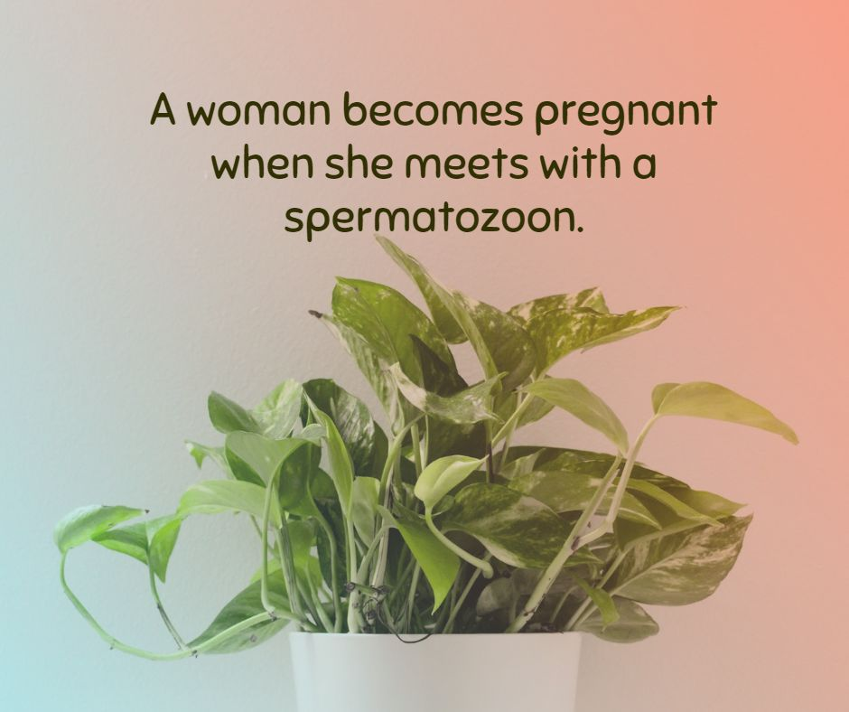 A woman becomes pregnant when she meets with a spermatozoon.